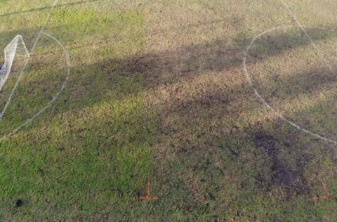 overseeding comparison in front of goal mouth